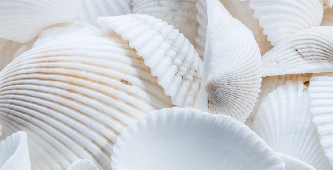 Got Seashells? Ebon Gate 2020